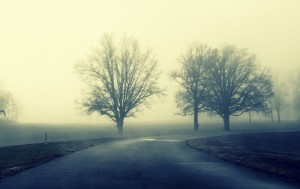 545166_they_guard_the_way_trees_road_fog_3456x2183_(www.GdeFon.ru)